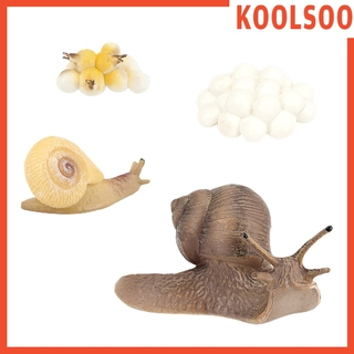 [KOOLSOO] Marine Creatures Growth Diary Simulation Snail Life Cycle Set Model Action & Toy Figures Teaching & Education Students Toys