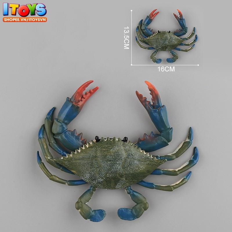 9 Động vật biển chất lượng cao 12.5 - 18cm | mô hình động vật biển cho trẻ em, trưng bày, làm quà tặng ITOYS