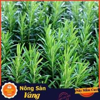 Hạt giống Cây Hương Thảo ( Gói 15 Hạt ) - Nông Sản Vàng