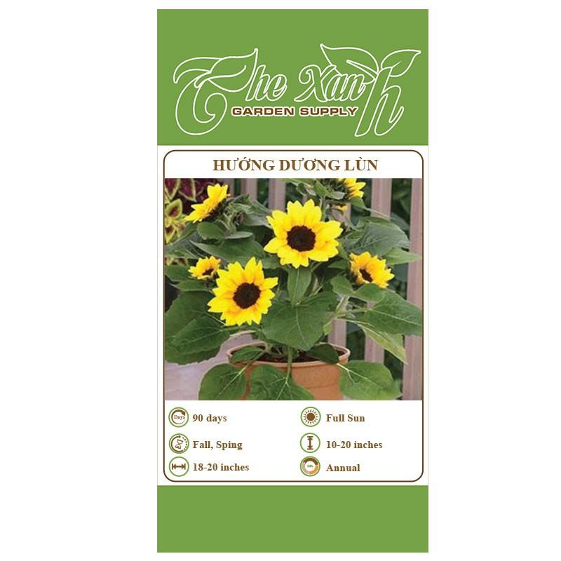 Gói 30 hạt giống hoa hướng dương lùn The Xanh Garden Supply