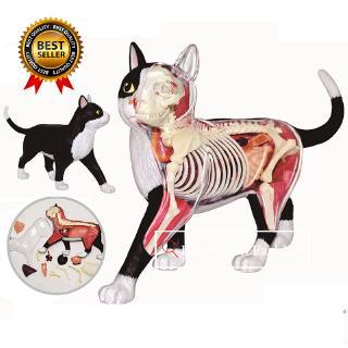 Cat Assembling Toys Animal Biology Organ Anatomical Model Medical Teaching Model