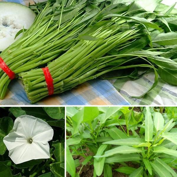 Hạt giống rau muống gói lớn 1 kg