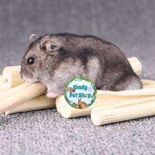 Măng tre ngọt mài răng cho Hamster, Soc Bông, Sóc Đất, Thỏ, Bọ... thumbnail
