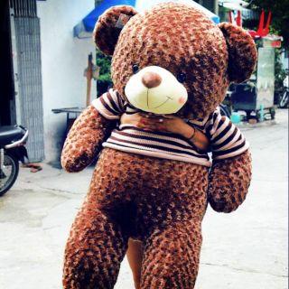 Gấu teddy khổ vải 2m cao 1m8