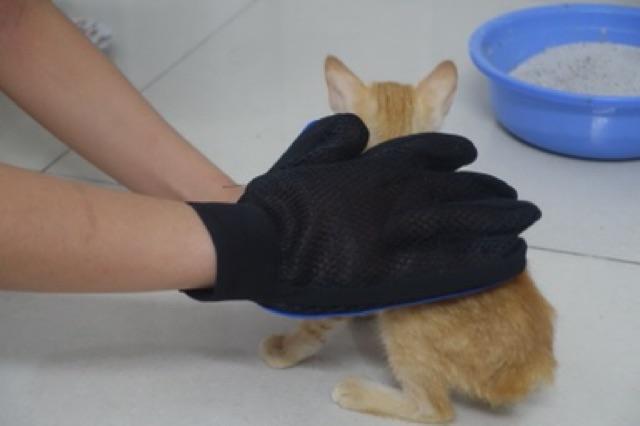 [Mã 267FMCGSALE giảm 8% đơn 500K] Găng tay chải lông rụng chó mèo thay thế lược chải lông siêu tiện lợi