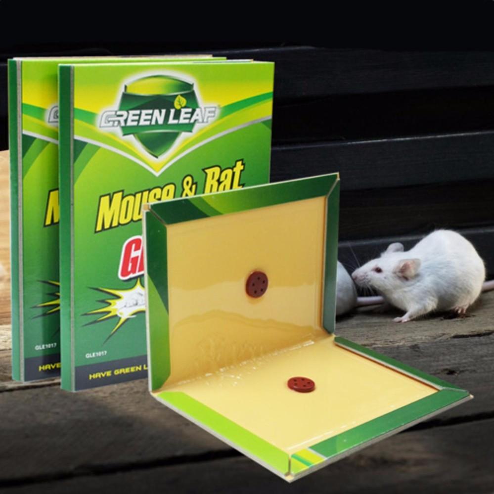 vỉ keo dính chuột