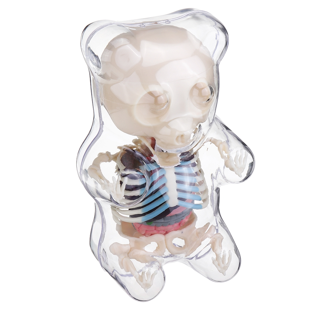 4D MASTER STEM Anatomy Model Bear Skeleton Anime Assembly Action Figure Gifts