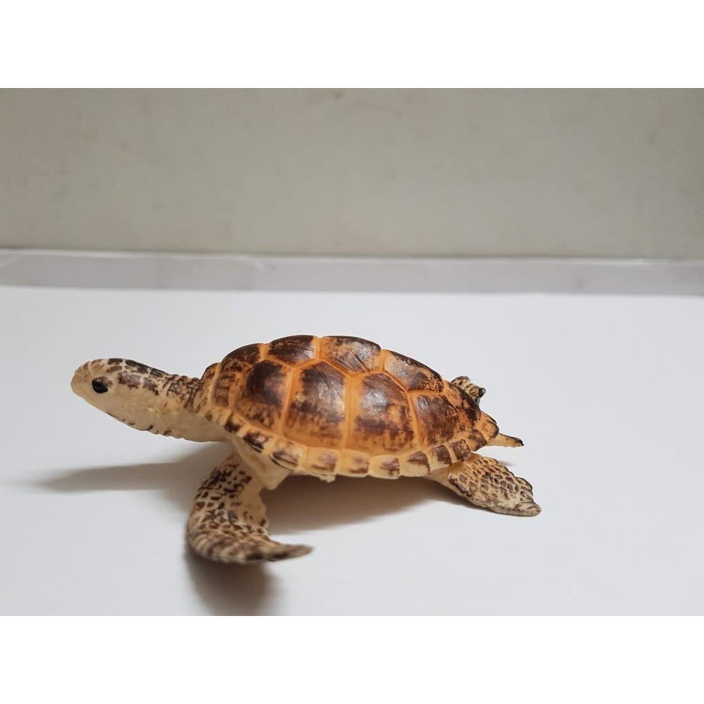 Mô hình rùa biển