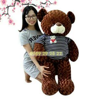 Gấu Teddy khổ 1m2 (cao1m)