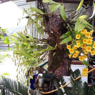 Combo 10 loại lan rừng giá siêu mềm cho ae yêu Lan