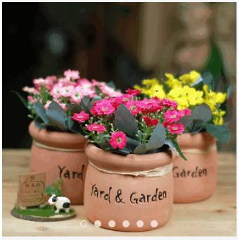Chậu hoa nhỏ để bàn - chậu gốm hoa cúc - 9958015 , 407050372 , 322_407050372 , 105000 , Chau-hoa-nho-de-ban-chau-gom-hoa-cuc-322_407050372 , shopee.vn , Chậu hoa nhỏ để bàn - chậu gốm hoa cúc