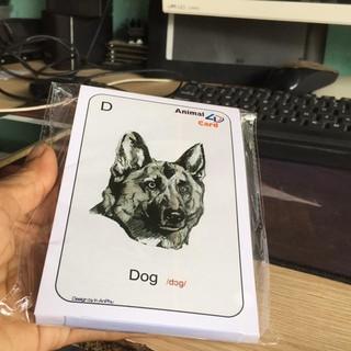 Thẻ Học Thông Minh Animal 4D