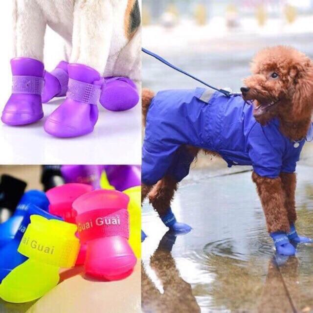 [Mã 267FMCGSALE giảm 8% đơn 500K] Giầy đi mưa ,đi chơi của thú cưng