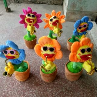 Hoa hướng dương uốn éo