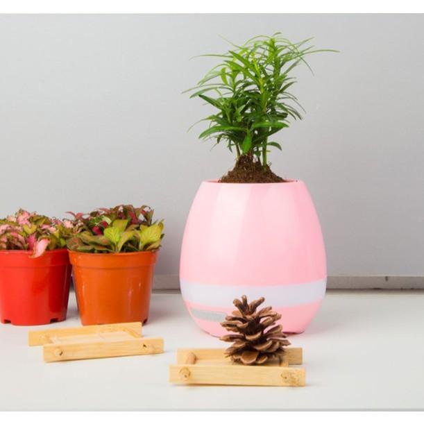 Bình trồng cây phát nhạc kết hợp loa Bluetooth, kiêm đèn ngủ (Hồng)