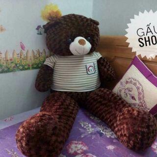 Teddy m6