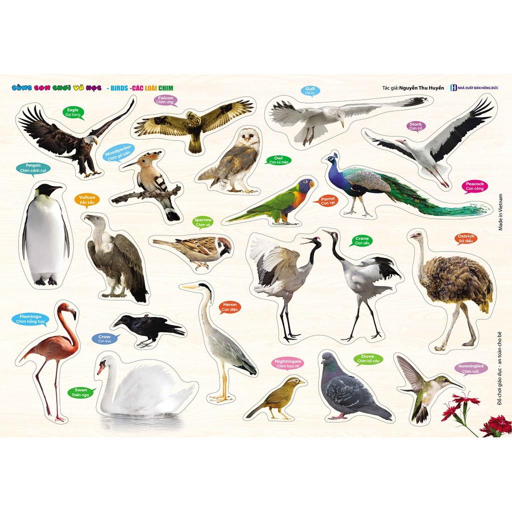 Sách - Cùng con chơi và học - Bird Các loài chim