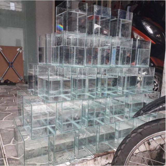Hồ.kính mini để bàn nuôi betta guppy