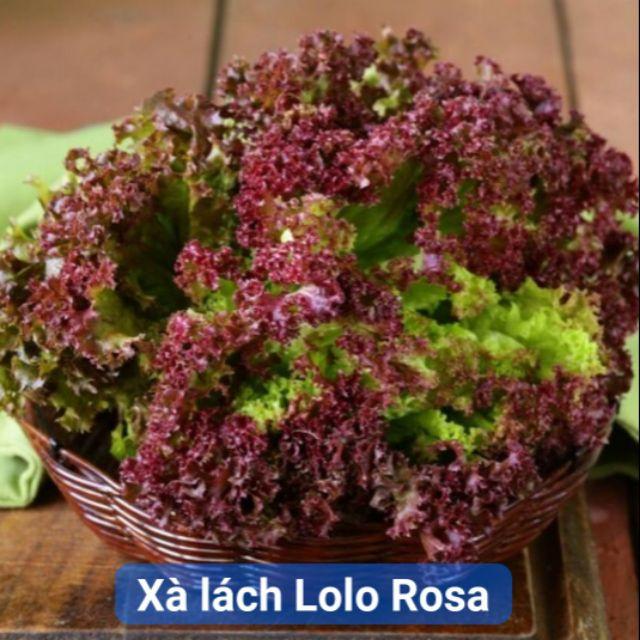 Hũ 1gr (~1000 hạt) giống xà lách xoăn đỏ sậm Lolo Rosa Mỹ hạt trần cây đẹp