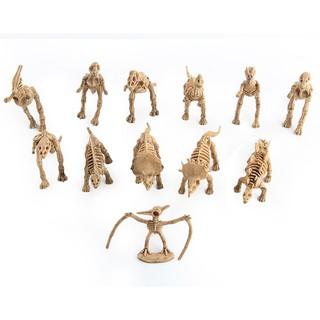 12 Mô hình xương hóa thạch khủng long