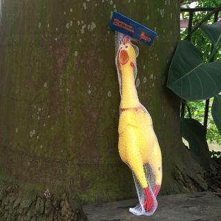 Gà bóp kêu Shrilling chicken 41cm