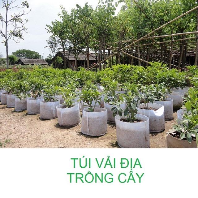 Túi vải địa trồng cây 2 quai xách kích thước 45x40cm 1 cái