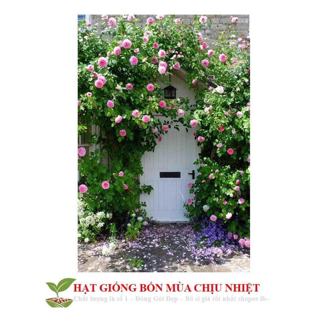 GÓI 20 HẠT GIỐNG HOA HỒNG LEO PHÁP tặng kèm 1 gói kích thích nảy mầm 20 Hạt giống hoa Hồng leo Pháp mix