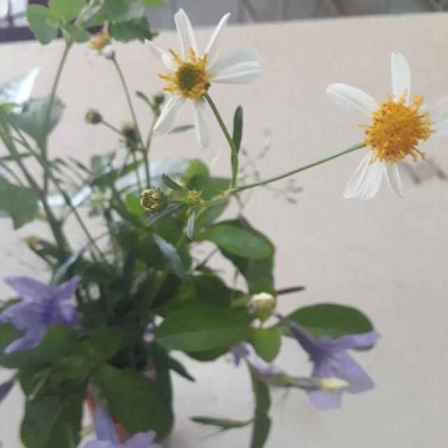 Combo LINH nước hoa đẹp tự nhiên
