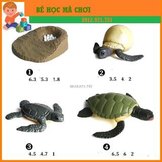 Mô hình Vòng đời của RÙA BIỂN - TURTLE life cycle thumbnail