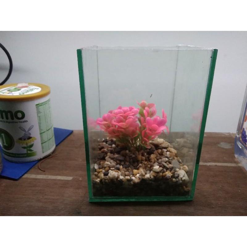 Bể cá cảnh mini - betta hải dương