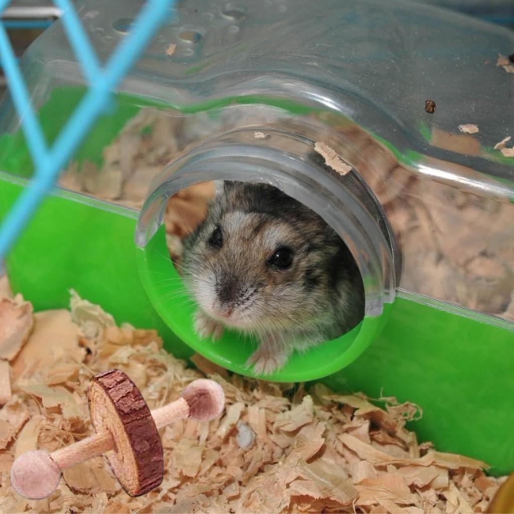 Bộ Đồ Chơi Gặm Nướu Cho Chuột Hamster