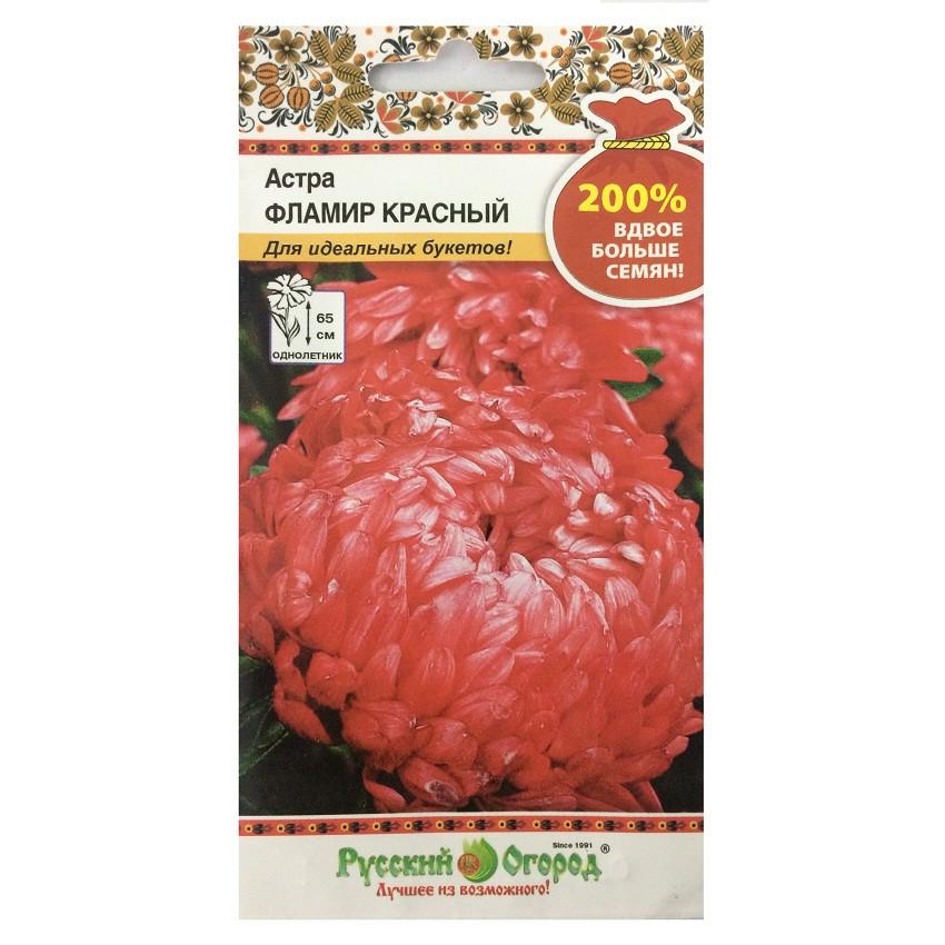 Hạt giống hoa cúc Astra đỏ- 711584