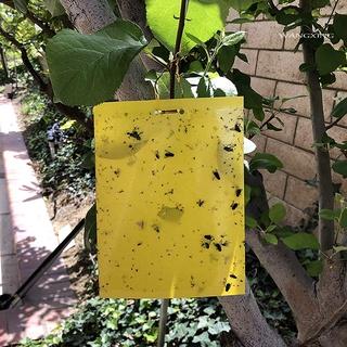 Set 20 keo dính ruồi an toàn cho sân vườn - hình 1