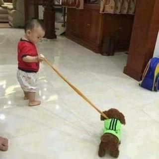 Chó giả biết sủa bít đi
