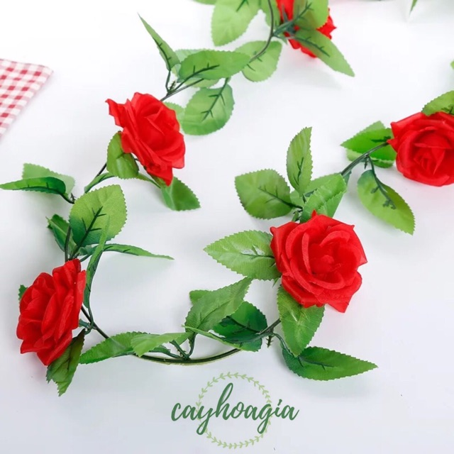 Dây leo hoa hồng trang trí