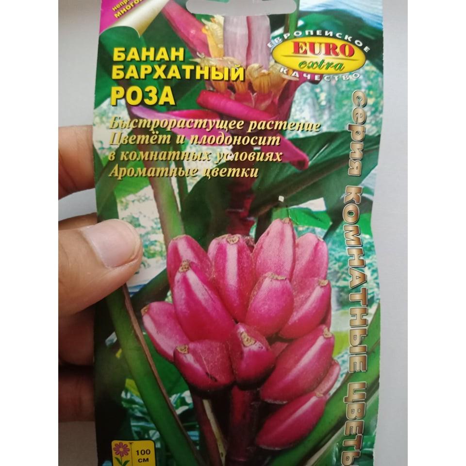 Hạt giống chuối đỏ siêu ngọt dễ trồng-3 hạt
