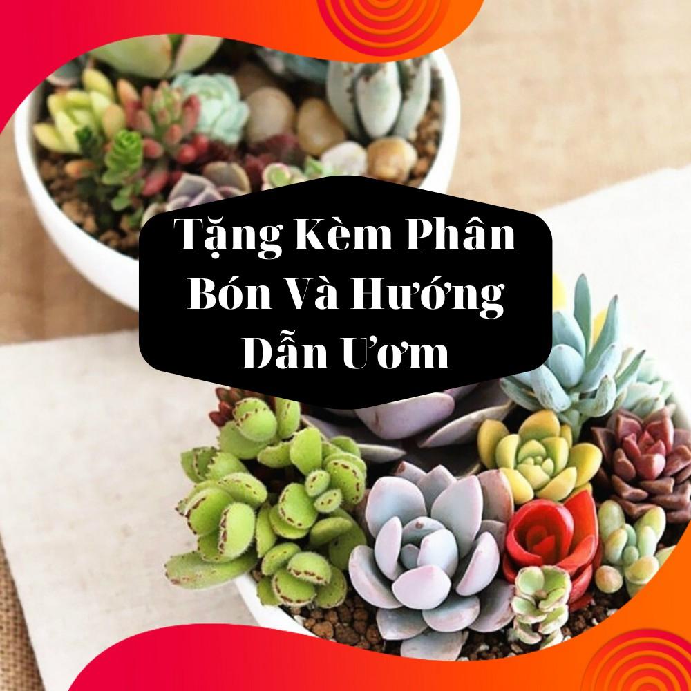 Gói Hạt Giống Sen Đá Mix - Tặng Kèm Phân Bón
