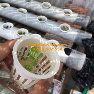 50 Rọ Nhựa Thủy Canh 65 - 55mm, viên ném xơ dừa