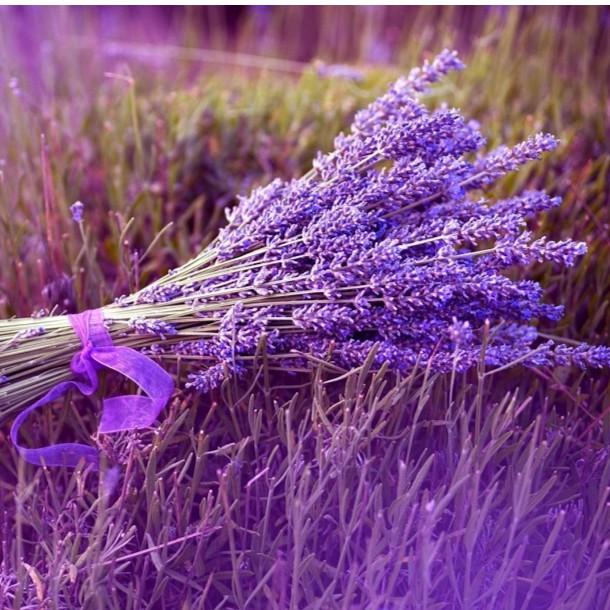 BỘ Hạt Giống Hoa Oải Hương Tím ( 100 hạt) tặng 1 phân bón