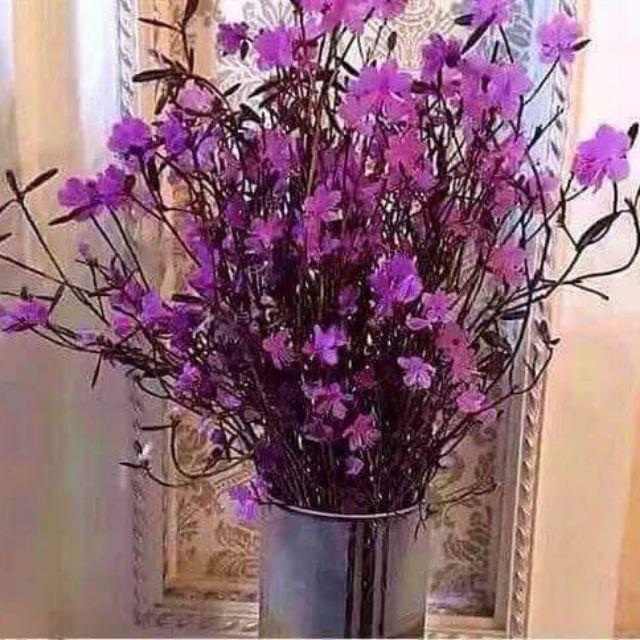 Hoa đỗ quyên khô giá siêu rẻ
