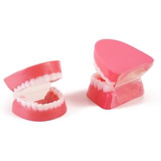 Hàm răng mô hình dạy bé nhận biết và giữ gìn răng