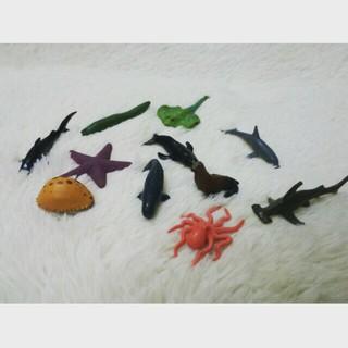 Combo sinh vật biển
