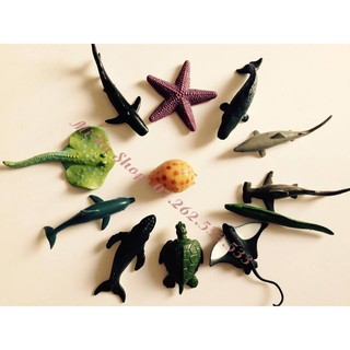 Mô hình sinh vật biển Xuất Khẩu Safari