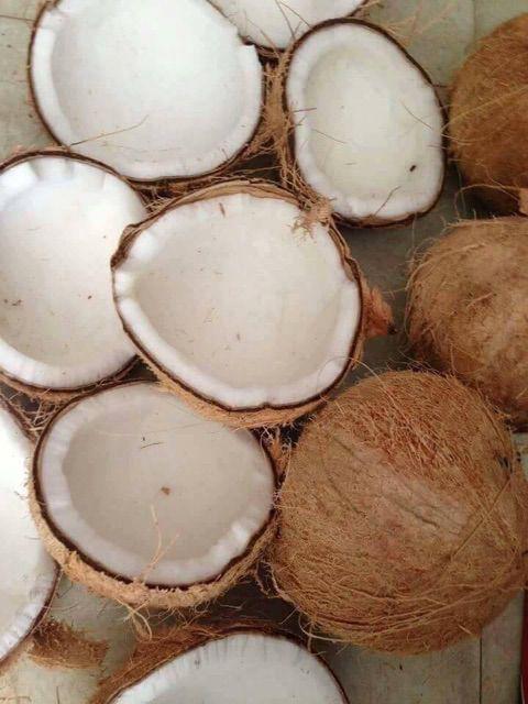 1lọ lăn môi dầu dừa 10ml cực thơm nguyên chất 100%