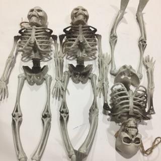 Bộ khung xương RẢ cỡ 107cm