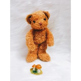 bé teddy nâu thân thái
