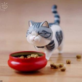 mèo cute