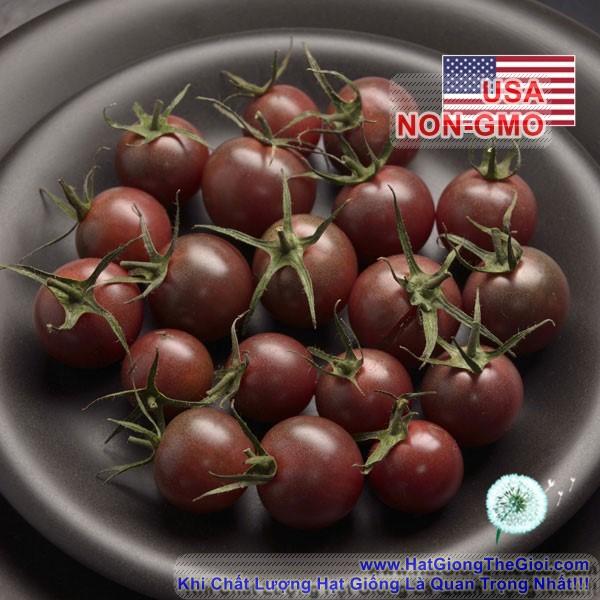5h Hạt Giống Cà Chua - Chocolate (Solanum lycopersicum)
