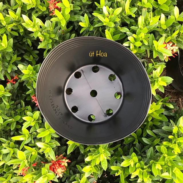 [Sỉ từ 20 cái] Chậu nhựa đen C9 trồng cây hiệu Phước Lộc (dày dặn)