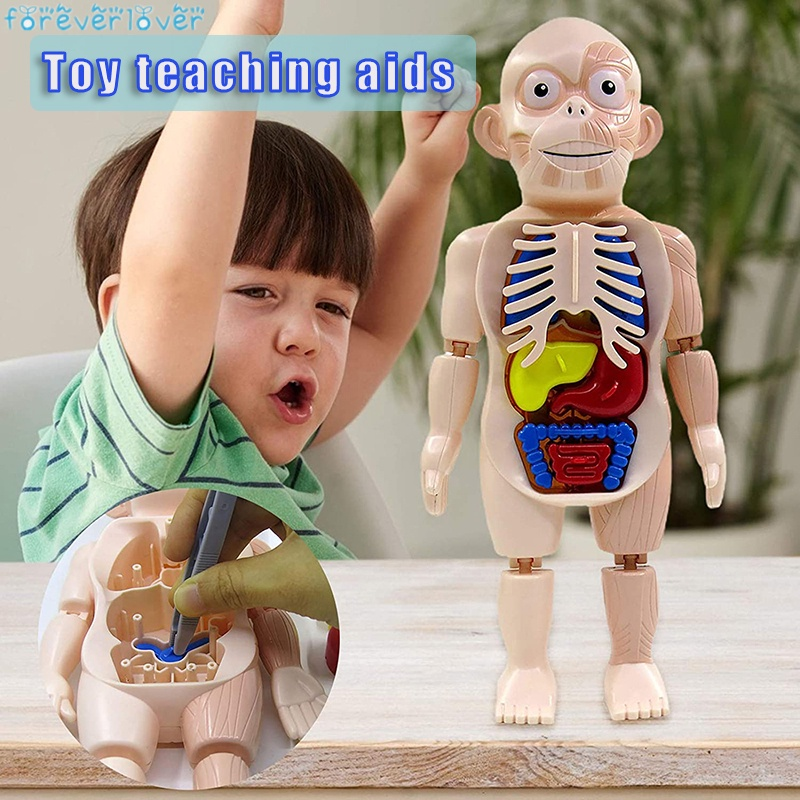 Human Organ Model Set DIY Assemble Human Anatomy Model Removable Educational Toy Great Gift for Children